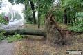 Usuwanie powalonych drzew po nawałnicy