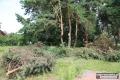 Strażacy ochotnicy usuwali połamane drzewa (zdjęcia)