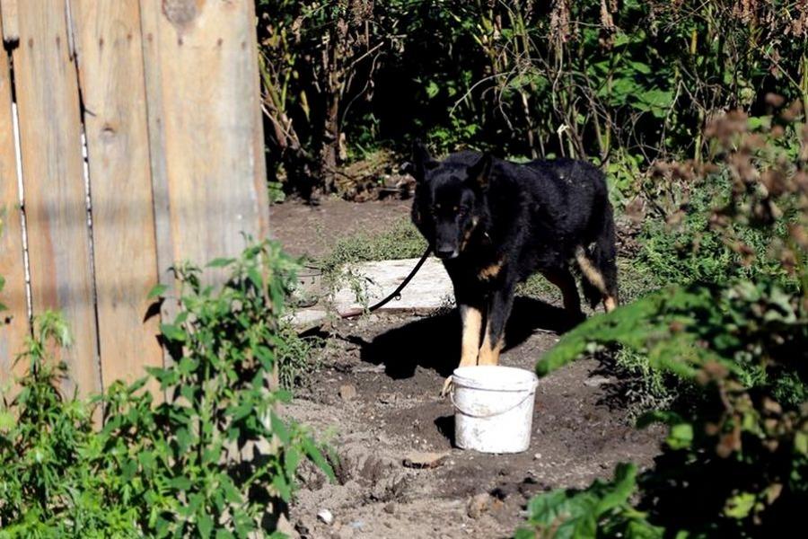 9c036e56f1 Skrzynka skarg  na zaniedbanej działce pozostał pies - Moja ...