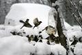 W Polsce atakuje złośliwy typ ptasiej grypy