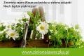 'Zielona ławeczka' pozwoli zagospodarować zieleń w mieście - do 30.04.